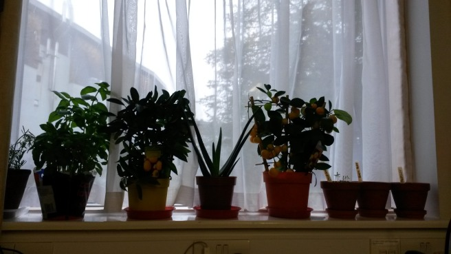 My actual windowsill. Unfortunately I'm not green-fingered at all and so nothing looks particularly healthy right now.